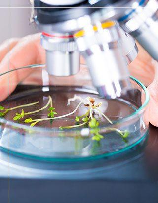 לימודי הוראת ביולוגיה